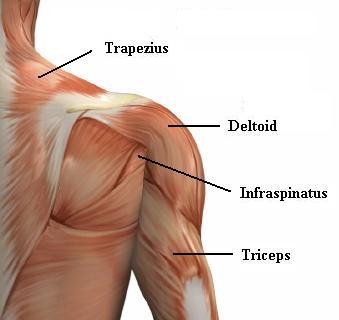 آسیب آرنج | Sport-lavasan